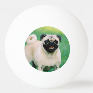 Poised Pug Ping Pong Ball
