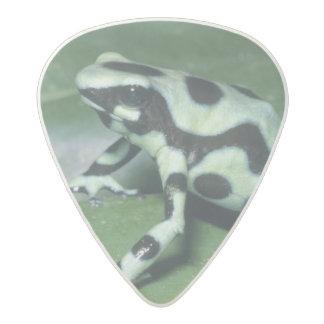 Poison Dart Frog, (Dendrobates auratus) Cahuita Acetal Guitar Pick