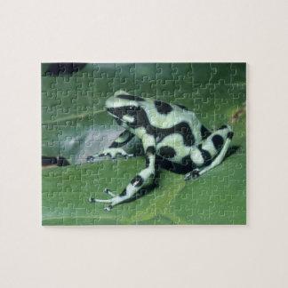 Poison Dart Frog, (Dendrobates auratus) Cahuita Jigsaw Puzzle
