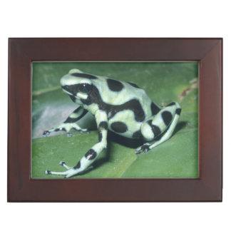 Poison Dart Frog, (Dendrobates auratus) Cahuita Keepsake Box