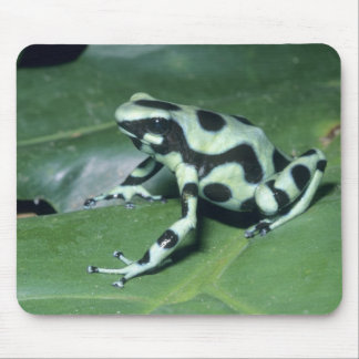 Poison Dart Frog, (Dendrobates auratus) Cahuita Mouse Pad