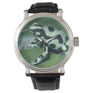 Poison Dart Frog, (Dendrobates auratus) Cahuita Watch