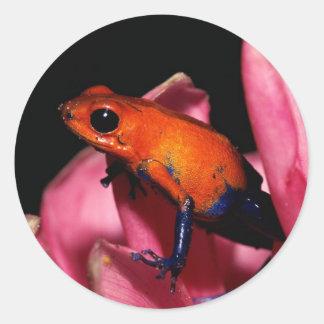poison dart frogs 2 round sticker