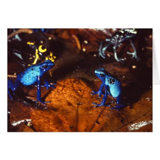 Poison Dart Frogs Card