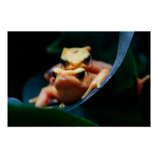 Poison Dart Frogs Posters