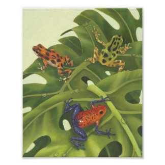 Poison Dart Frogs Print