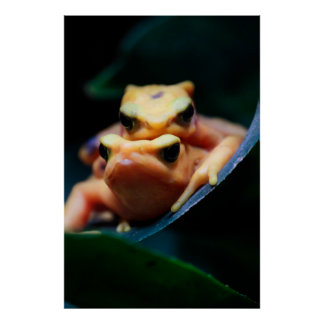 Poison Dart Frogs Wildlife Animal Photo Print