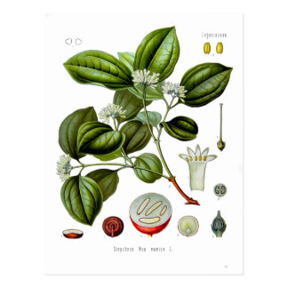Poison nut tree vintage illustration card postcard