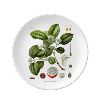 Poison nut tree vintage illustration plate porcelain plate