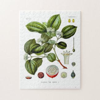 Poison nut tree vintage illustration puzzle