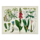 Poisonous Plants Poster