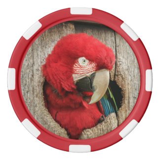 Poker chip Green Wing Macaw parrot in barrel