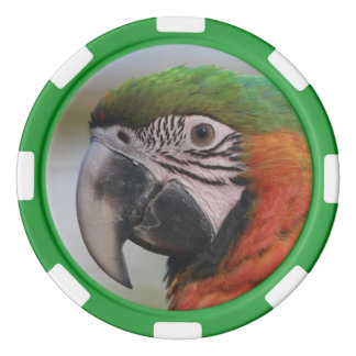 Poker chip Harlequin Macaw parrot