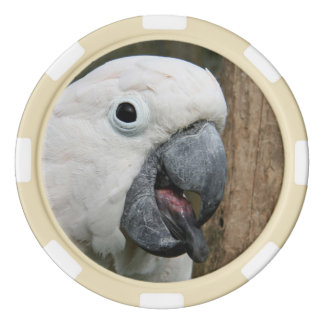 Poker chip Moluccan cockatoo parrot tongue out