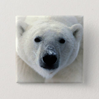 Polar Bear 15 Cm Square Badge