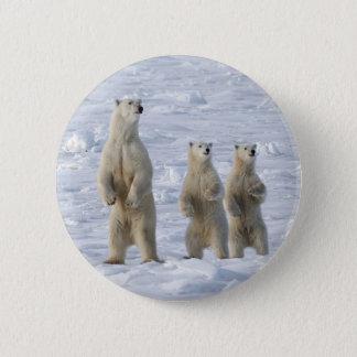 Polar bear 6 cm round badge