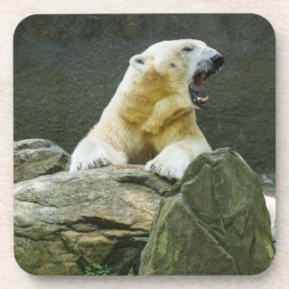 Polar Bear - Angry Coaster