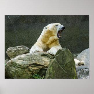 Polar Bear - Angry Poster