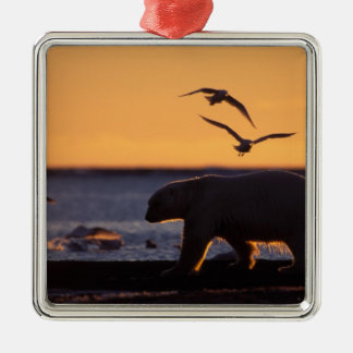 Polar bear at sunrise with glaucous-winged Silver-Colored square decoration