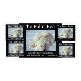 Polar Bear Cartesian Bear Photo Cards