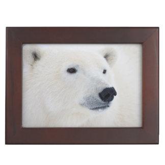 Polar Bear Churchill Keepsake Box