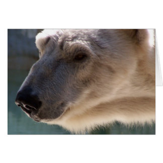 Polar Bear Close Up Portrait Greeting Card