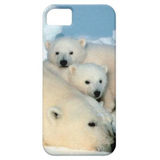 Polar bear cub 1 iPhone 5 covers