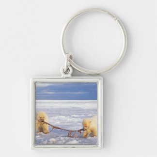 Polar bear cubs and meat on pack ice of frozen key ring
