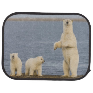 Polar bear cubs and their mother floor mat