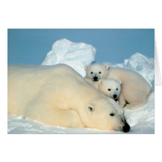 Polar Bear & Cubs by Steve Amstrup Card