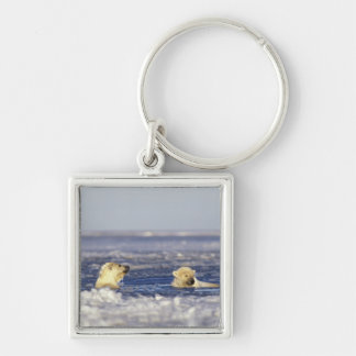 Polar bear cubs playing in pack ice of the Silver-Colored square key ring