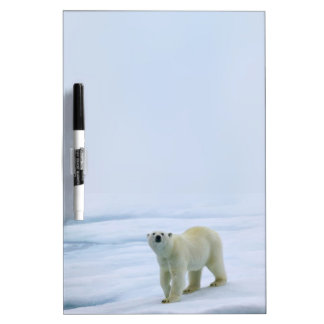 Polar Bear Dry Erase Board