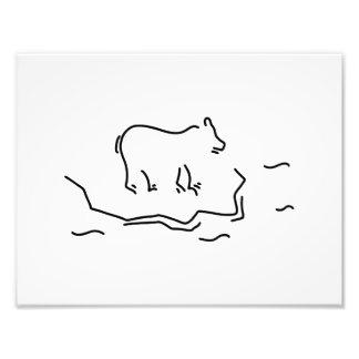 polar bear eisscholle antartkis polar bear photo