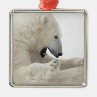Polar bear engaging in a fight with another bear ornaments