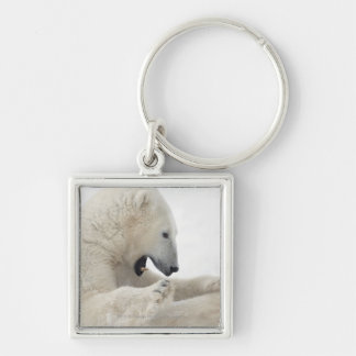 Polar bear engaging in a fight with another bear key ring