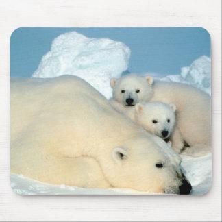 Polar Bear Family Mouse Mat