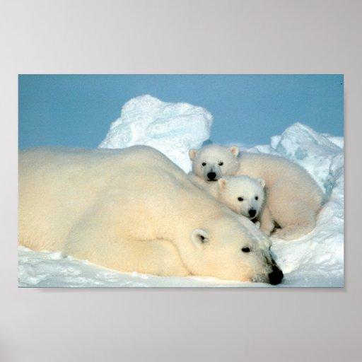 Polar Bear Family Poster