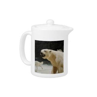 Polar Bear Grin