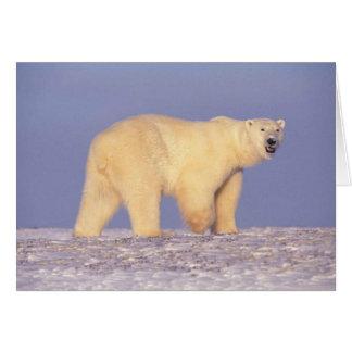 Polar Bear in Arctic Alaska Note Card