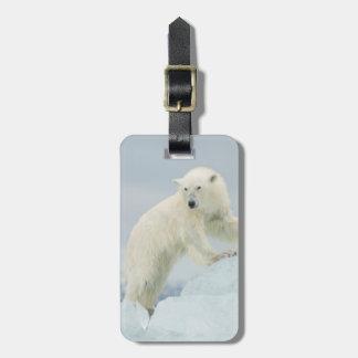 Polar bear in summer bag tag