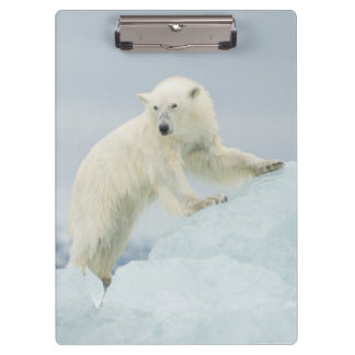 Polar bear in summer clipboard