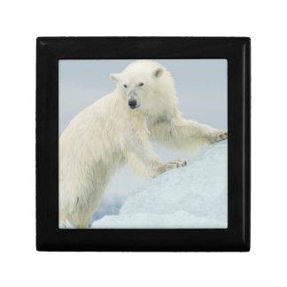Polar bear in summer gift box