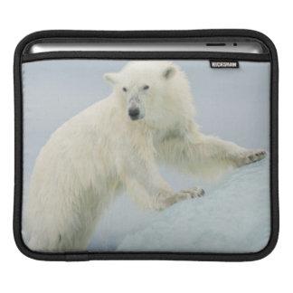 Polar bear in summer iPad sleeve