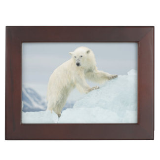 Polar bear in summer keepsake box