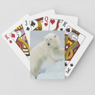 Polar bear in summer poker deck