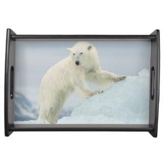 Polar bear in summer serving tray
