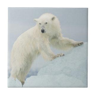 Polar bear in summer tile