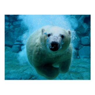 Polar Bear In Water Postcard