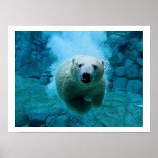 Polar Bear In Water Poster