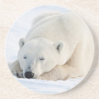 Polar Bear in winter Coaster